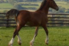 foal2015-2